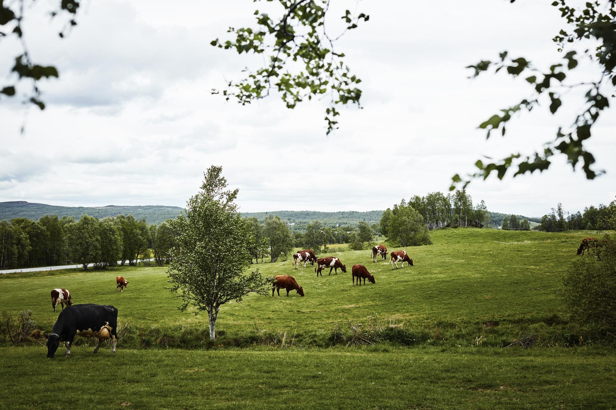 Foto: Øivind Haug